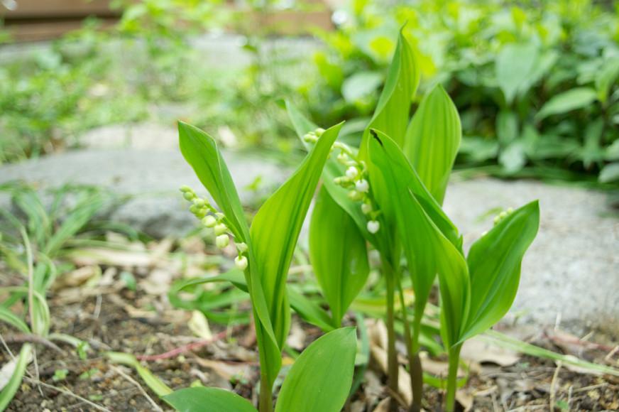 Ao fazer uma horta em casa, você garante alimentos saudáveis e livres de agrotóxicos!