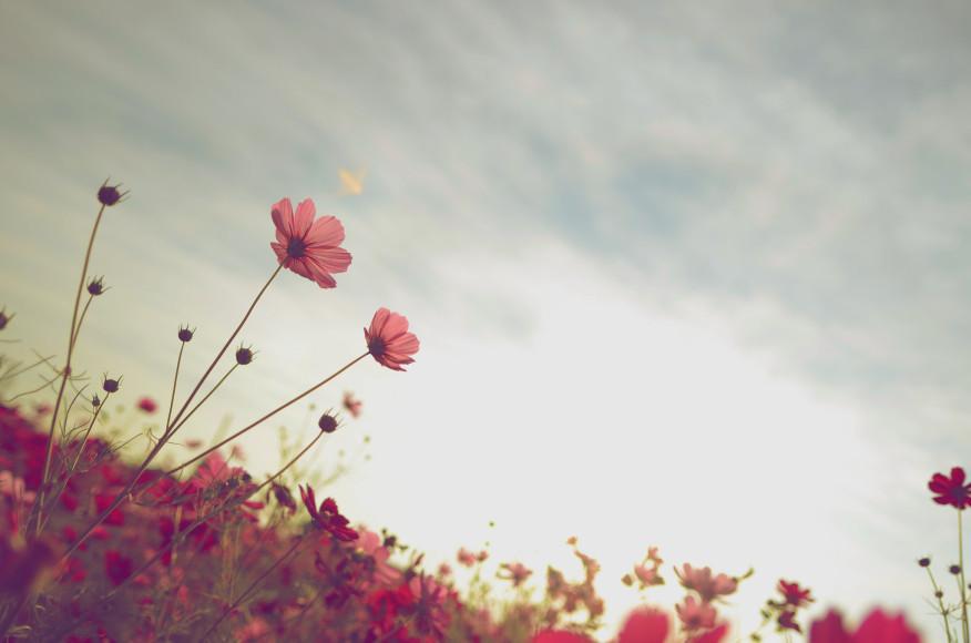 O ato do perdão traz paz e conforto ao coração.