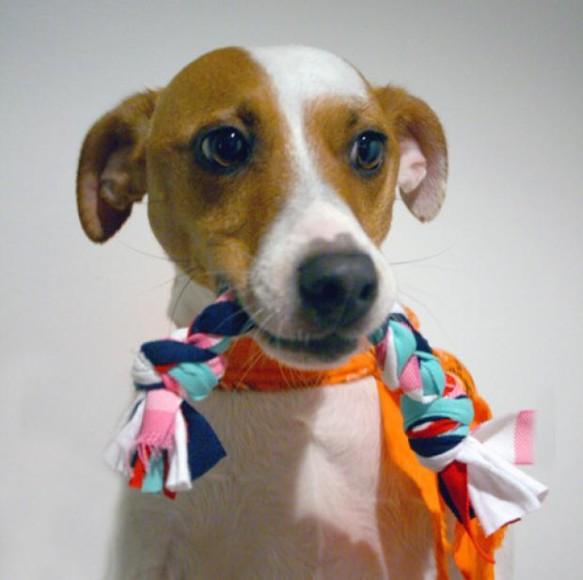 Brinquedos-Inteligentes-para-Cachorros-10