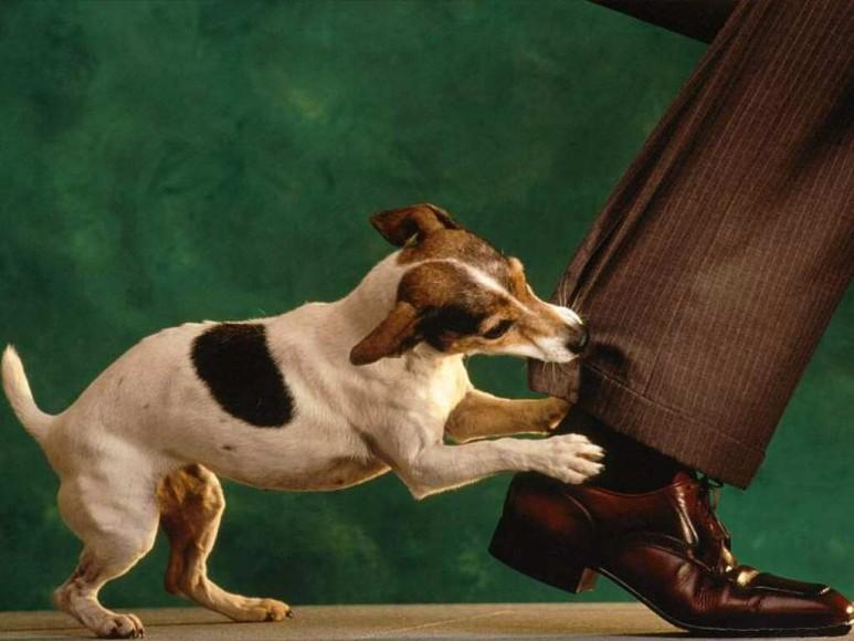cachorro-mordendo-a-calca-fed47