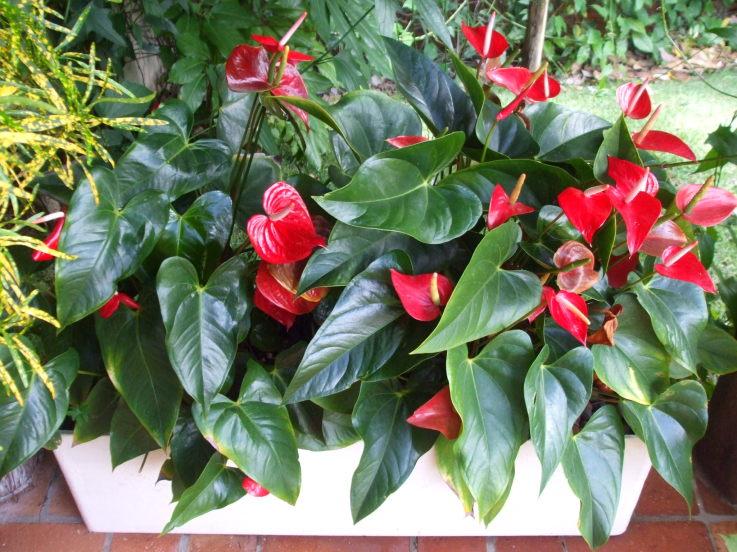 Como escolher as plantas certas para a sua varanda for Plantas de interior anturio