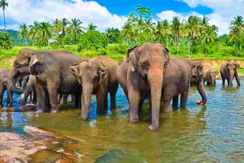 sri-lanka-elephants-bathing.jpg.pagespeed.ce.de5uXX-o8F